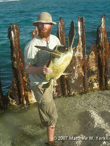 rescue-of-hawaiian-green-sea-turtle-web